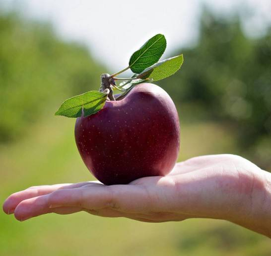 Интересные факты о яблоках: топ-10
