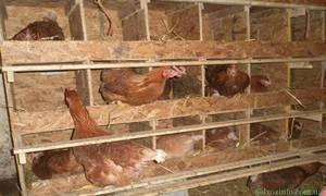 Гнезда для кур: изготовление в домашних условиях