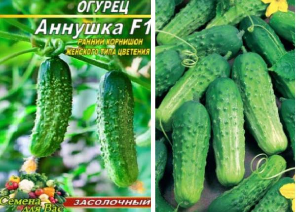 Огурец брейк f1: отзывы об урожайности и формировании, описание сорта, посадка и уход, фото семян гавриш
