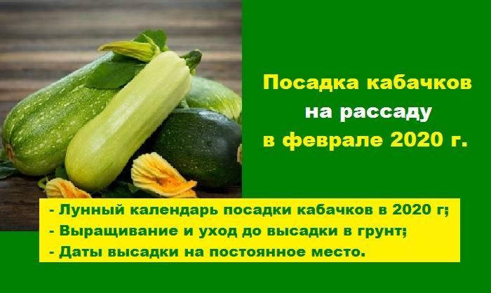 Выращивание кабачков - как вырастить кабачки на рассаду из семян и в открытом грунте