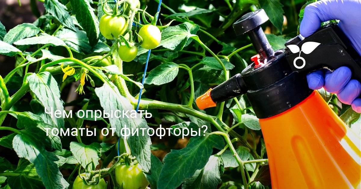 Применение медного купороса для помидоров