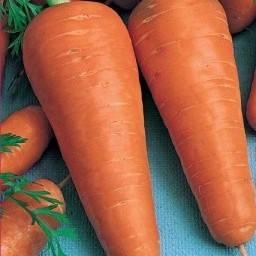 Выращивание моркови в открытом грунте: видео подготовки семян, почвы, уход за морковью
