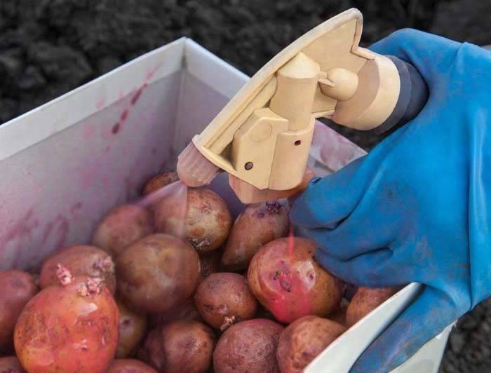 Престиж для картофеля: инструкция по обработке и дозировка