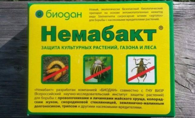 Стеклянница на смородине на supersadovnik.ru