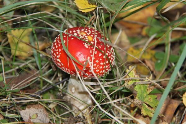 Можно ли отличить съедобные грибы от несъедобных