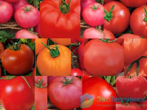 Детерминантный и индетерминантный сорт помидор: что это, отличие
