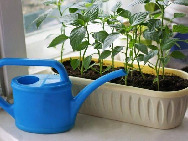 Как и чем подкормить рассаду перцев в домашних условиях народные средства фото видео