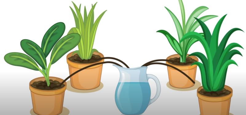 Автополив для комнатных растений - лучшие идеи, которые можно сделать своими руками