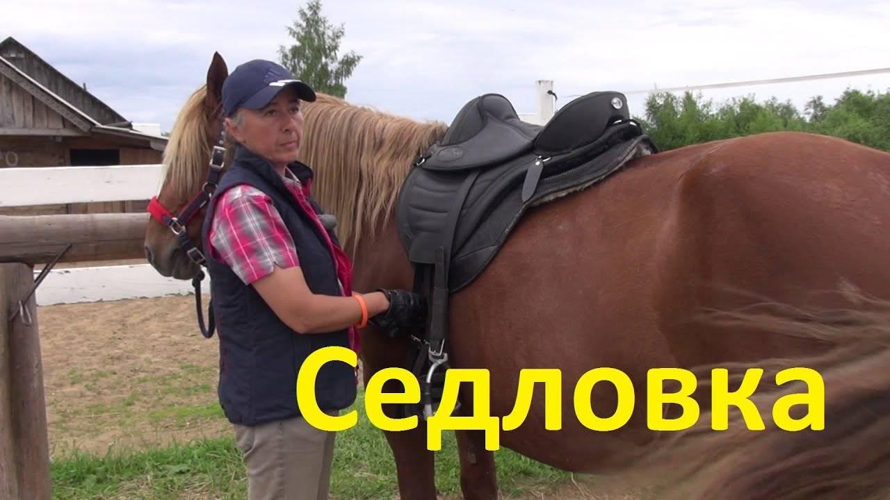 Стоит ли ездить верхом на лошади, как ее седлать и надевать уздечку?