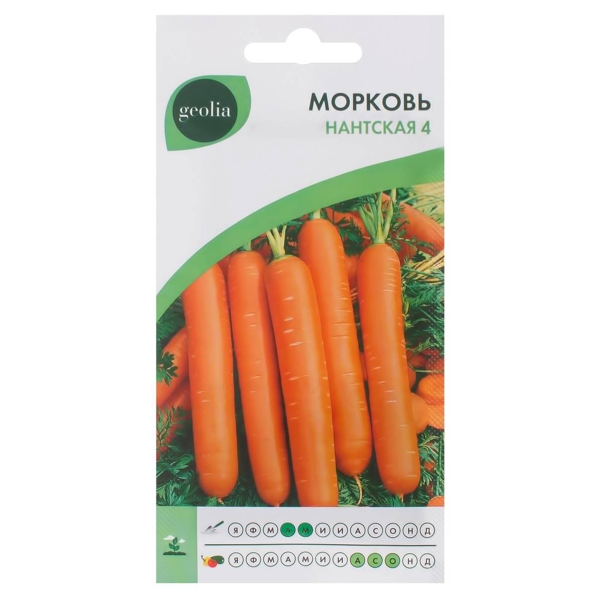 ✅ нантская 4: описание сорта моркови, характеристики, агротехника - tehnomir32.ru