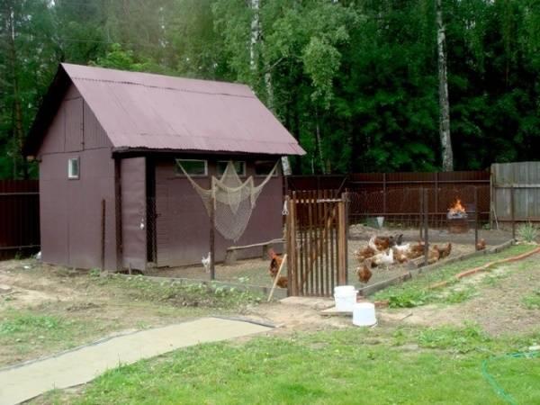 Куры на даче - правила, нормы и рекомендации по разведению птицы