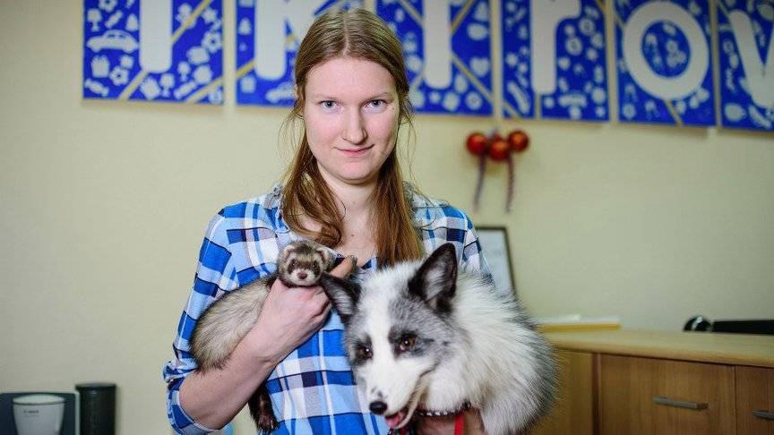 Способен ли домашний хорек подружиться с кошкой или собакой