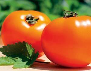 Томат хурма - особенности выращивания и описание томата (фото + видео)
