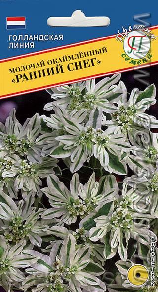 Молочай окаймленный: сбор семян, выращивание и размножение, уход за горным снегом