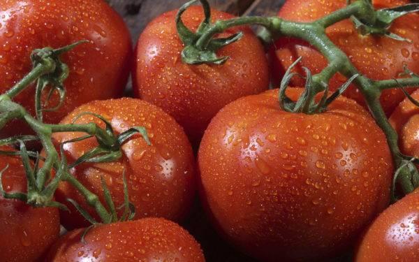 Томат корнабель f1: описание и характеристика сорта, особенности выращивания, отзывы, фото