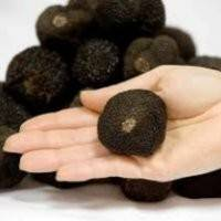 Секреты выращивания трюфелей в домашних условиях
