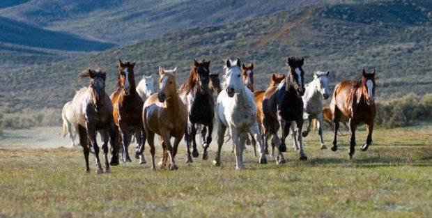 Сколько живут лошади и как определить их возраст
