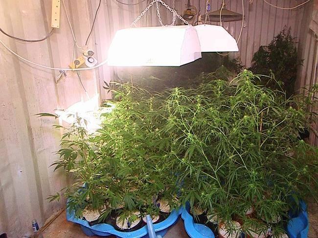 Гидропоника для салатов своими руками: оборудование, выращивание