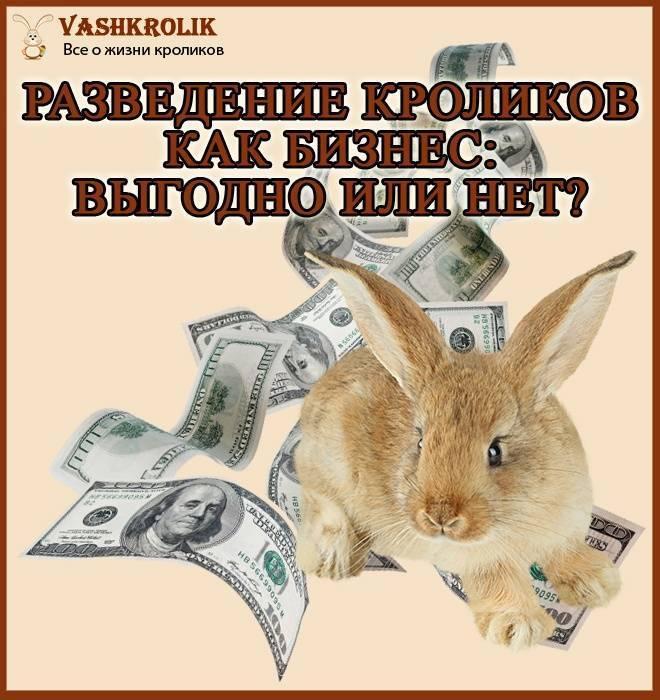 Разведение кроликов как бизнес: выгодно или нет, план кролиководческой фермы с расчетами, плюсы и минусы выращивания, рентабельность и видео для начинающих