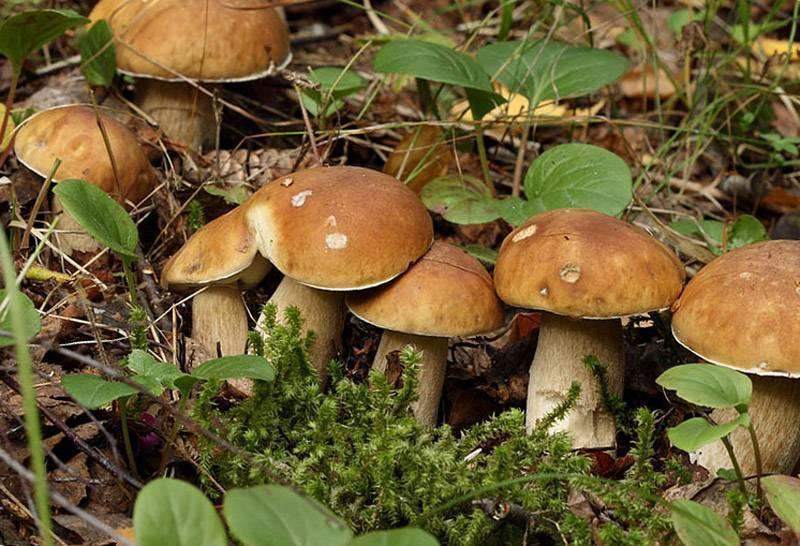 Как посадить и выращивать грибы на даче или в огороде