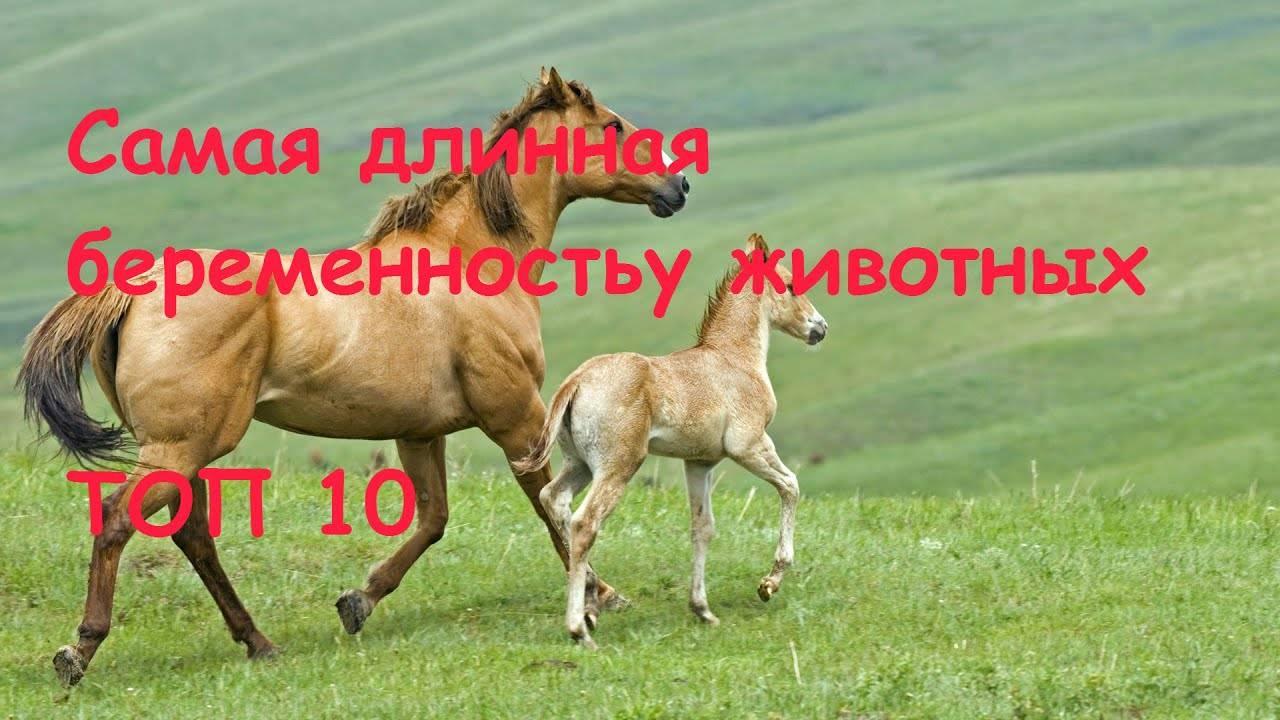 Ивермек инструкция по применению для животных: крс, телят, свиней, коз - дозировки