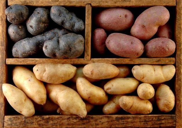 Как хранить картофель в домашних условиях
