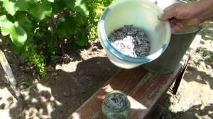 Подкормка огурцов в теплице и открытом грунте, народные средства, способы и виды подкормок
