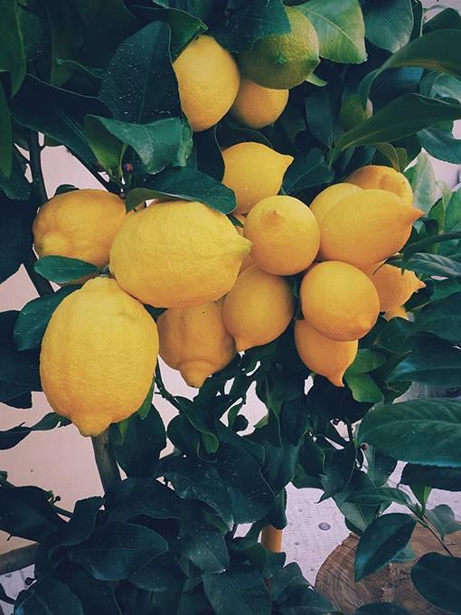 Отличия лимона от лайма