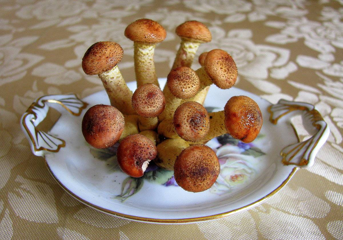 Грибники кубани: сбор грибов в весенне-летний сезон
