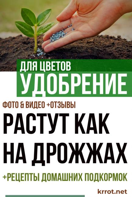 Подкормка огурцов в открытом грунте: рецепты, способы