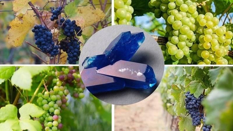 Как правильно обрабатывать виноград медным купоросом