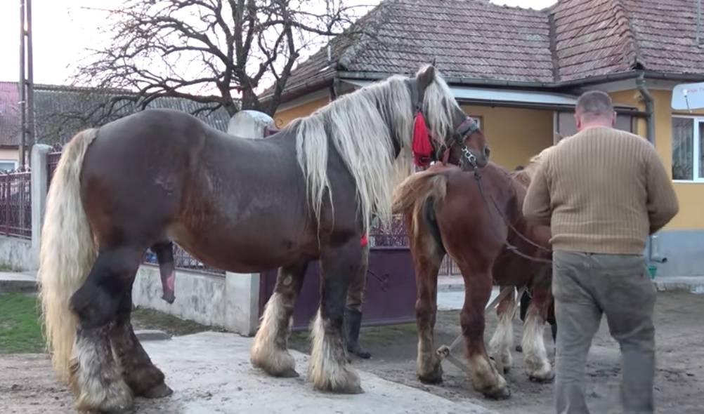 Лошадь спаривается с человеком