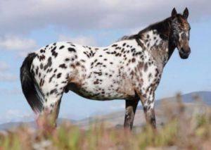 Подковка лошадей: предназначение, виды, процесс выполнения ковки
