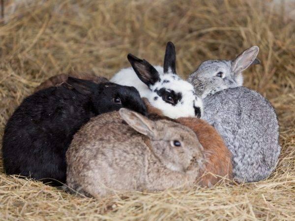 Искусственное осеменение кроликов - агро эксперт