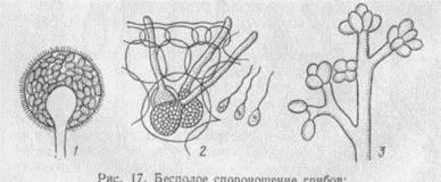 Общая характеристика царства грибы. строение, питание и размножение грибов