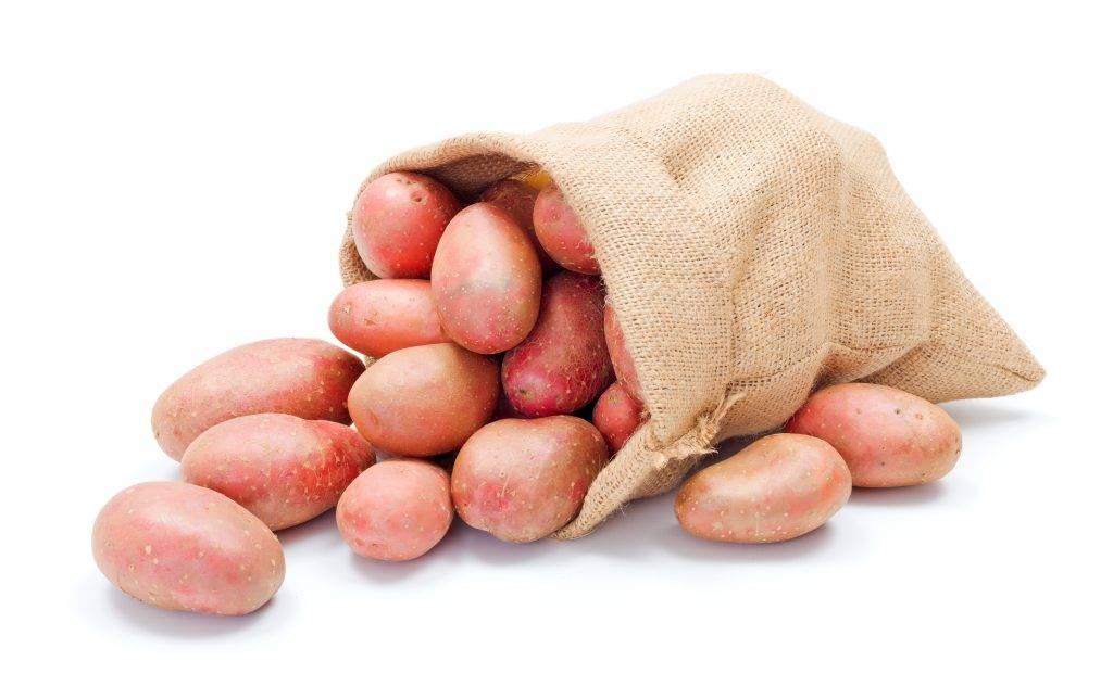 Сорт картошки любава: описание и фото, отзывы садоводов