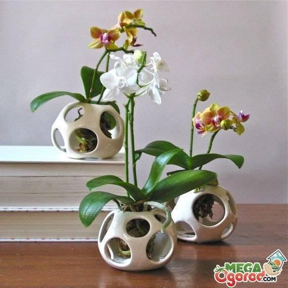 Посадка орхидей в керамзит: плюсы и минусы посадки. нужен ли керамзит для орхидеи? - herbgid.ru