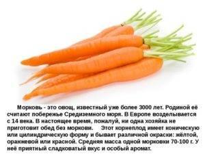 Помидор — ягода, фрукт или овощ?