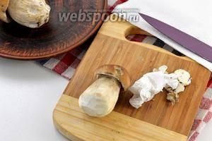 Как чистить белые грибы перед приготовлением | «vsemkulinaram.ru»