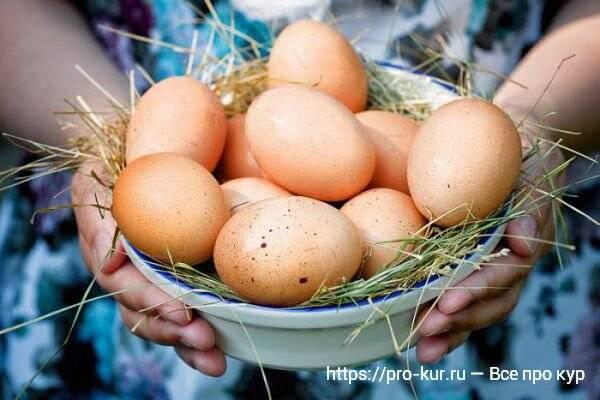 Котляревские куры: на удивление жизнеспособные и неприхотливые. обладают отличной яйценоскостью и достаточным количеством нежного сочного мяса