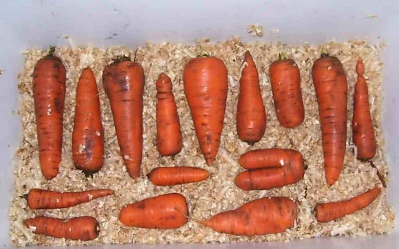 Как хранить морковь зимой в погребе и подвале - лучшие способы с фото и видео