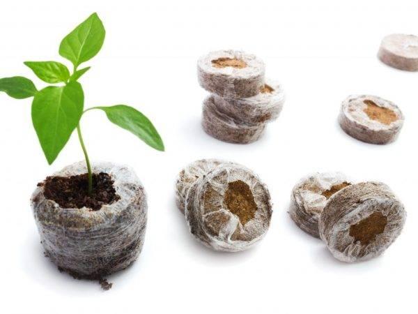 Рассада перца в торфяных таблетках: выращивание и посадка русский фермер