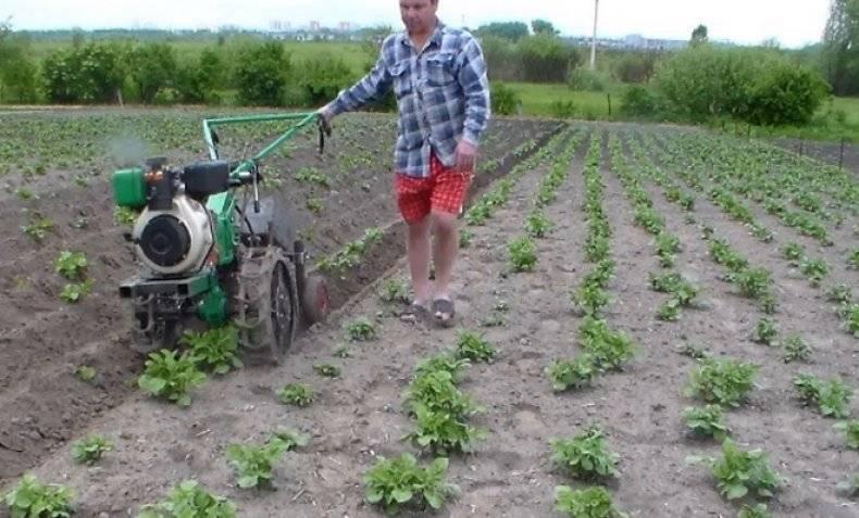 Как окучивать картофель вручную