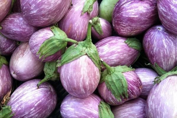 Польза и вред баклажанов   полезные свойства овоща для здоровья и организма человека