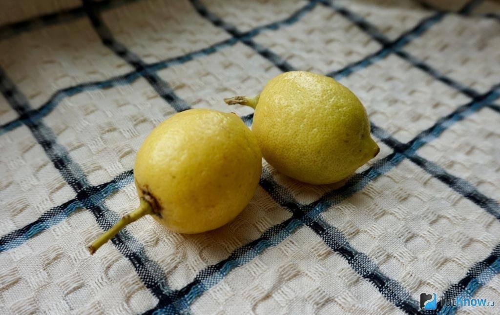Растение и дерево лимона: фото и описание листьев, цветов, кустов, применение и эфирное масло