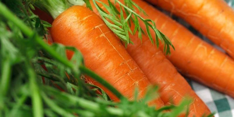 Когда убирать морковь с грядки на хранение в 2021 году: в подмосковье, в средней полосе, на урале, в сибири