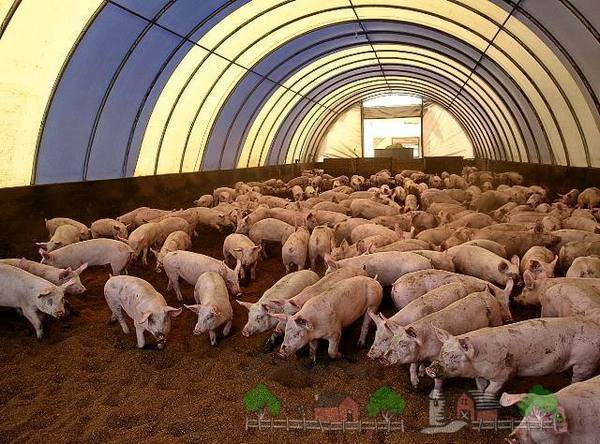Преимущества и недостатки подстилок с бактериями для свинарников, виды и уход за ними