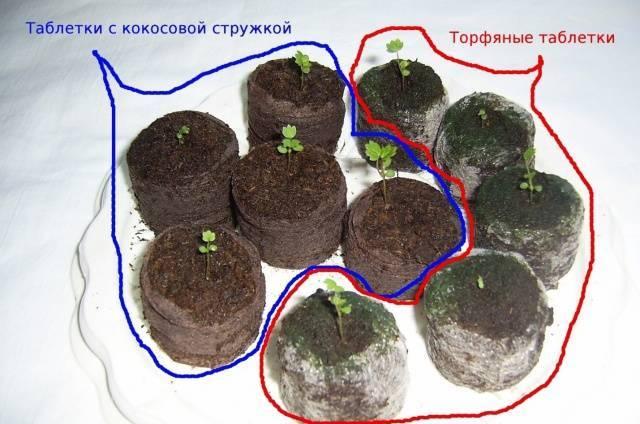 Как вырастить рассаду перца - каталог статей на сайте - домстрой