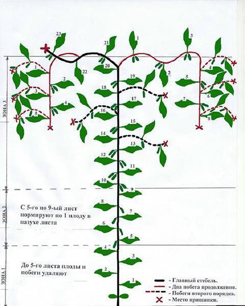 Обрезка огурцов в теплице схема - садоводству да