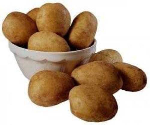 Сорт картофеля «романо»: характеристика, описание, урожайность, отзывы и фото